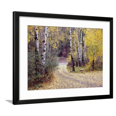 Birch Tree DriveFence & Road, Santa Fe, New Mexico 06 Framed Print Wall Art By Monte Nagler