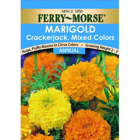 Image of Ferry Morse Flower Seed