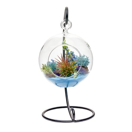 Air Plant Terrarium Kit Aquatic Paradise Natural Accents Series