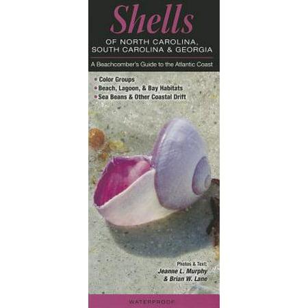 Shells of North Carolina, South Carolina & Georgia : A Beachcomber's Guide to the Atlantic Coast - North Coast Beer