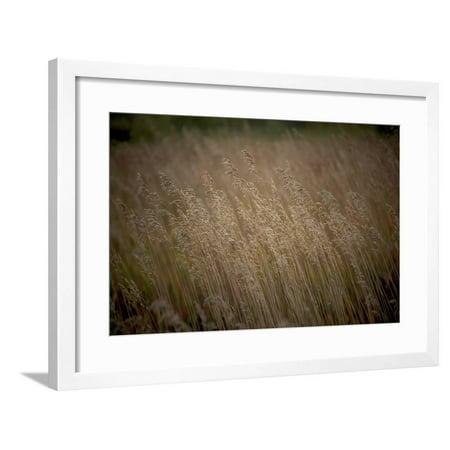 449 Framed Print Wall Art By Dan Ballard