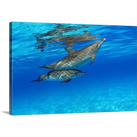 Great Big Canvas Dave Fleetham Premium Thick Wrap Canvas Entitled Caribbean  Bahamas  Bahama Bank  Two Atlantic Spotted Dolphin