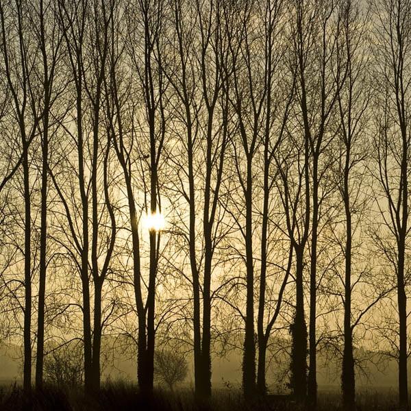 Zen Art & Design Artisanal Wooden Jigsaw Puzzle, Poplars at Sunrise, Medium by