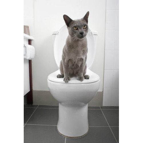 Litter Kwitter Cat Toilet Training System