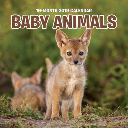 2019 Baby Animals Mini Wall Calendar, by Wells Street by - Animal Calendar