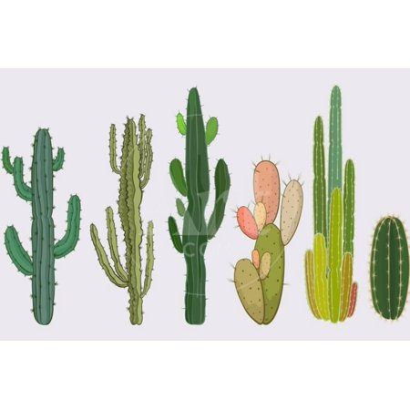 Cactus Collection in Vector Illustration Southwestern Boho Style Plant Artwork Print Wall Art By Roberto Chicano