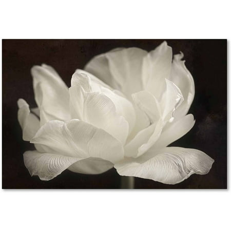 3 Arm Tulip - Trademark Fine Art 'White Tulip III' Canvas Art by Cora Niele