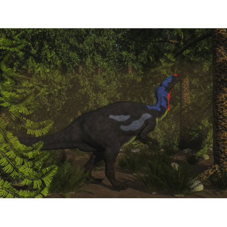 Camptosaurus dinosaur eating in a Wollemia pine forest Poster Print by Elena Duvernay ()