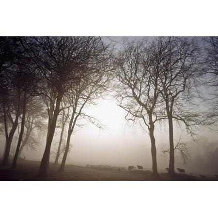 (Morning Mist Co Wicklow Ireland PosterPrint)