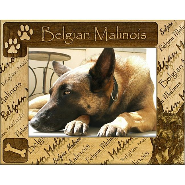 Giftworks Plus DBA0018 Belgian Malinois, Alder Wood Frame, 8 x 10 In
