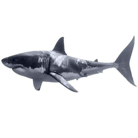 VWAQ Great White Shark Wall Decal Realistic Shark Stickers Peel And Stick Mural VWAQ-PAS3 (16