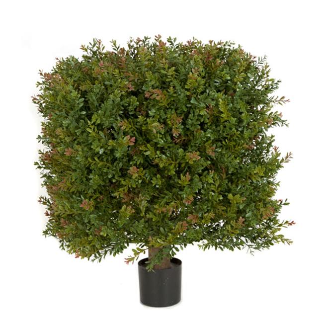 Autograph Foliages AUV-146020 24 in. WinterGreen Boxwood Square Topiary, Green & Red