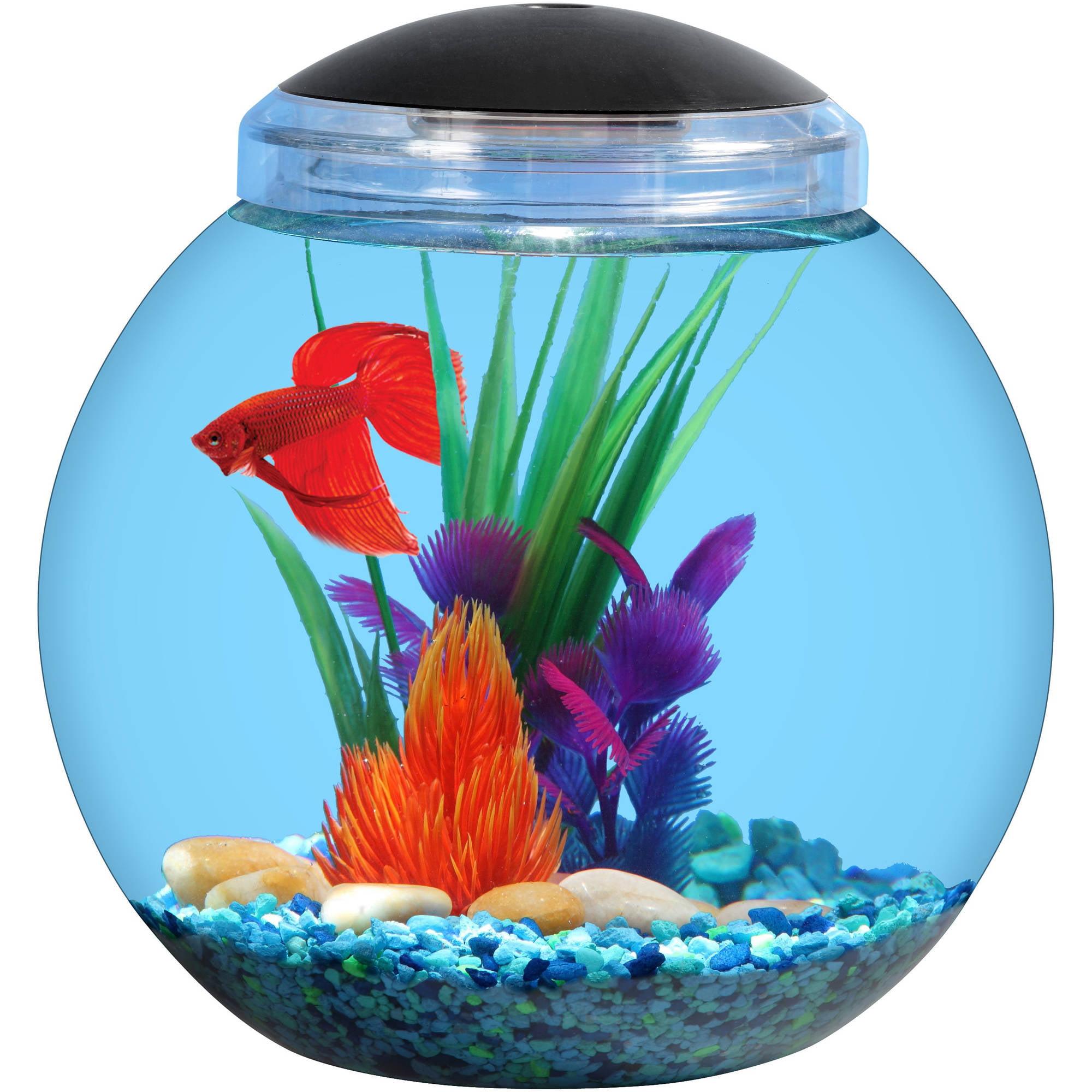 Aqua Culture 1 Gallon Betta Aquarium