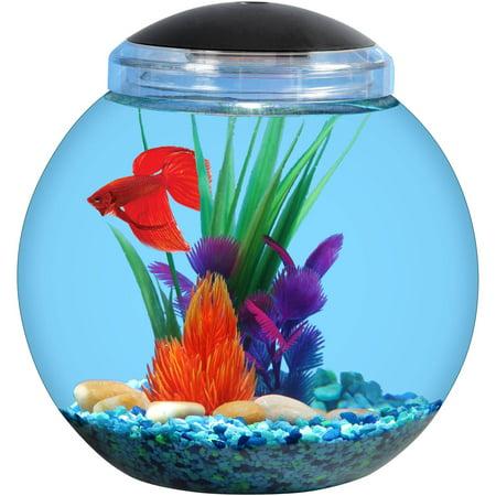 Aqua culture 1 gallon betta aquarium for Walmart betta fish