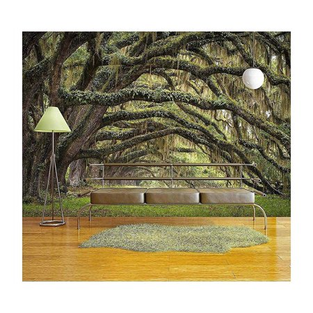 wall26 - Oaks Avenue Charleston Sc Plantation Live Oak Trees Forest Landscape in Ace Basin South Carolina Lowcountry - Removable Wall Mural | Self-adhesive Large Wallpaper - 66x96 inches - Halloween Live Wallpaper Android Market