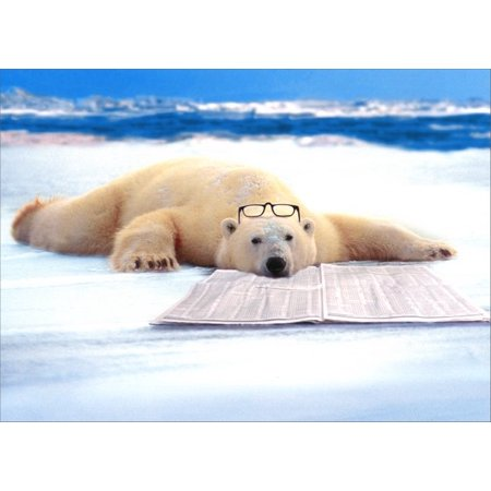 Avanti Press Polar Bear Nap Funny / Humorous Father's Day Card