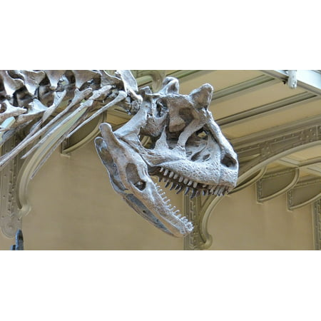 10' Comfort System - Canvas Print Dinosaur Skeleton Museum Skeleton Dinosaur Stretched Canvas 10 x 14