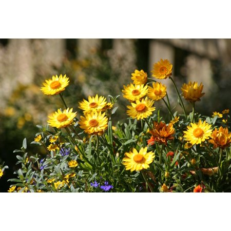LAMINATED POSTER Nature Atmosphere Flowers Spring Meadow Mood Poster Print 24 x
