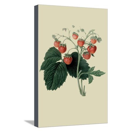 Wilmot's Late Scarlet Strawberry Stretched Canvas Print Wall Art By William Hooker