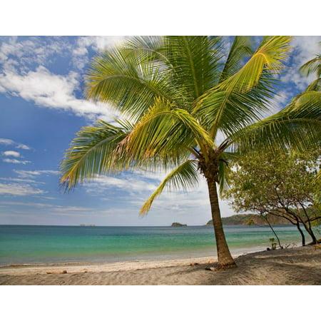 Palm trees line Penca Beach Costa Rica Poster Print by Tim Fitzharris