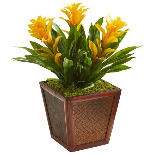 Bay Isle Home Triple Bromeliad Floral Arrangement in Decorative Planter