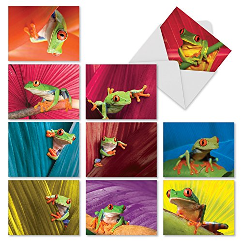 'M10023BK FROG DAYS' 10 Assorted All Occasions Cards With Images of the Red-eyed Tree Frog with Envelopes by The Best Card Company
