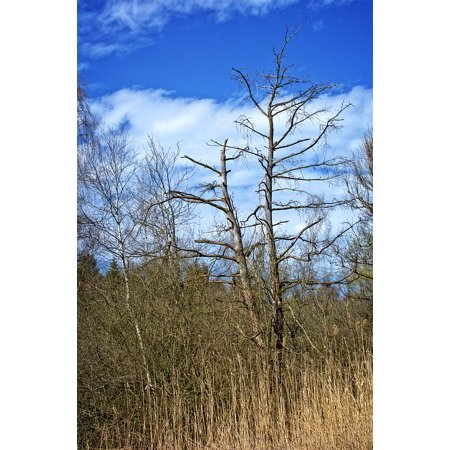 LAMINATED POSTER Aesthetic Sky Winter Tree Kahl Dead Plant Poster Print 24 x 36