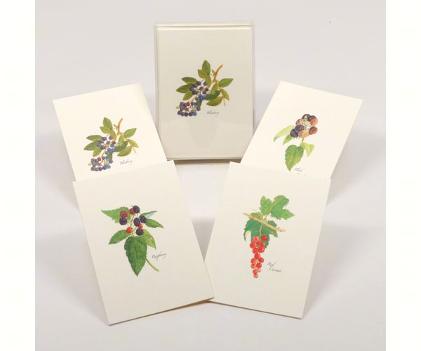 Earth Sky 8 Blank Cards with Envelopes Water 2 each of 4 styles Berry Assortment Notecard Set
