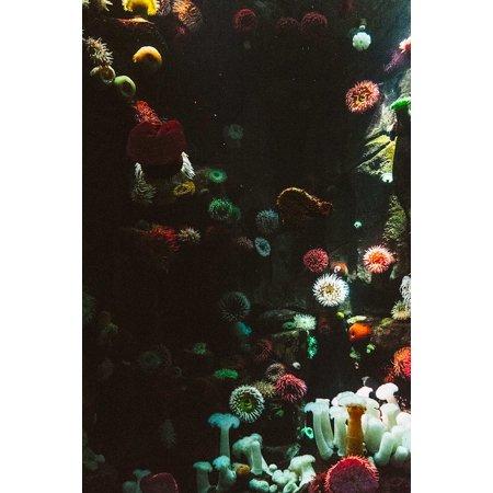 LAMINATED POSTER Decoration Aquarium Coral Anemone Color Art Poster Print 24 x 36 - Coral Reef Decoration