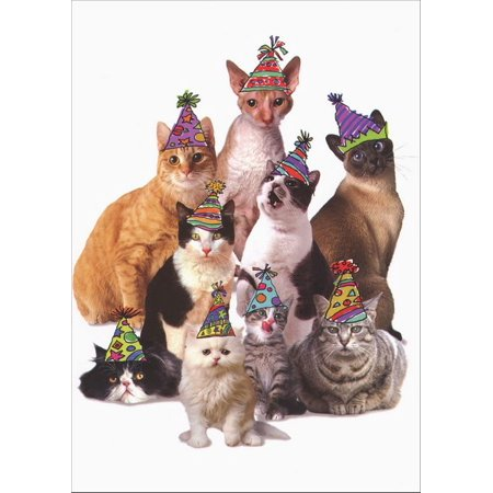 Graphique de France Cats in Party Hats Birthday Card from All (Cat In The Hat Invitations)
