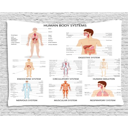Human Anatomy Tapestry, Complete Chart of Different Organ Body Structures Cell Life Medical Illustration, Wall Hanging for Bedroom Living Room Dorm Decor, 60W X 40L Inches, Multi, by Ambesonne