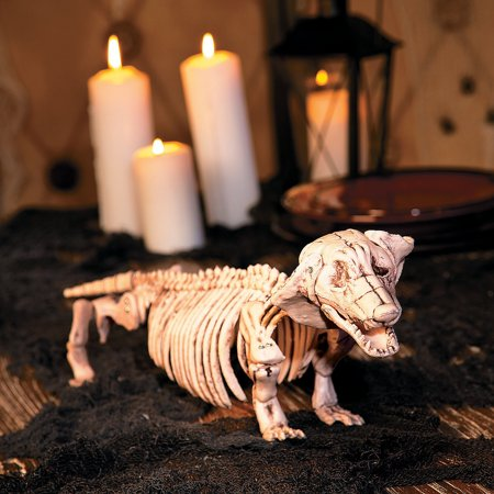Fun Express - Halloween Dachshund Skeleton for Halloween - Home Decor - Decorative Accessories - Home Accents - Halloween - 1 Piece ()