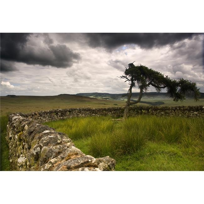 Stone Fence & Tree with Storm Clouds Yorkshire England Poster Print by John Short, 34 x 22 - Large - image 1 of 1