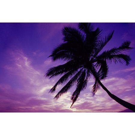 Hawaii Maui Kihei Kamaole Beach At Twilight With Purple Pink Sky Palm Tree Silhouetted D1554 Canvas Art - Ron Dahlquist  Design Pics (17 x -