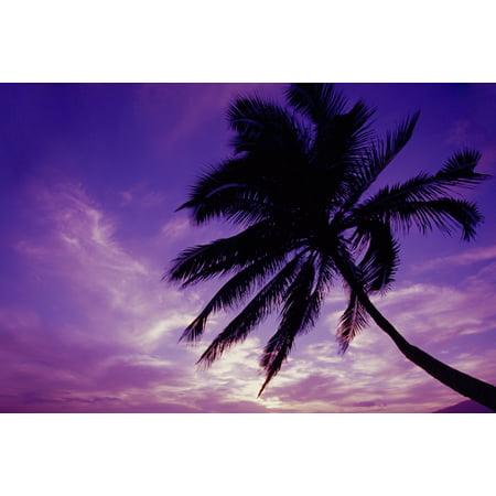 Hawaii Maui Kihei Kamaole Beach At Twilight With Purple Pink Sky Palm Tree Silhouetted D1554 Canvas Art - Ron Dahlquist  Design Pics (17 x (Maui Jim Nine Palms)