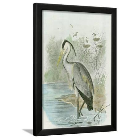 Heron Bay Wall - Common Heron Framed Print Wall Art