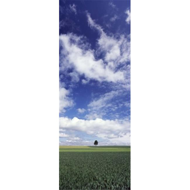 Panoramic Images PPI120544L Germany  Baden-Wurttemberg Single tree in field  clouds Poster Print by Panoramic Images - 12 x 36