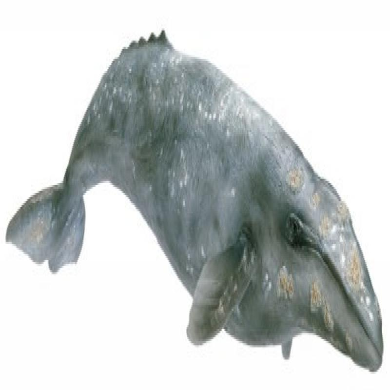 Schleich Grey Whale by