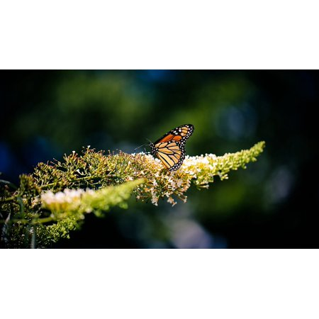 Canvas Print Nature Insect Fly Colorful Butterfly Animal Wings Stretched Canvas 10 x 14