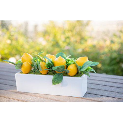 August Grove 13'' Beaded Lemons Desktop Succulent Plant in Ceramic Ledge MD
