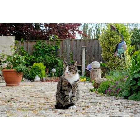 LAMINATED POSTER View Animal Pet Sit Cat Domestic Cat Nature Poster Print 24 x 36