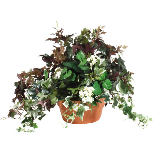 Dalmarko Designs Mixed Ivy Table Top Plant in Terracotta Planter