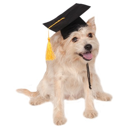School Graduate Black Pet Dog Cat Costume Graduation - Graduation Costume