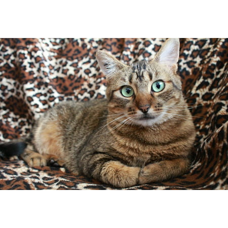 Canvas Print Grey Cat Pet Cat Cat Green Eyes Tabby Cat Stretched Canvas 10 x 14 (Dark Cat Eyes)