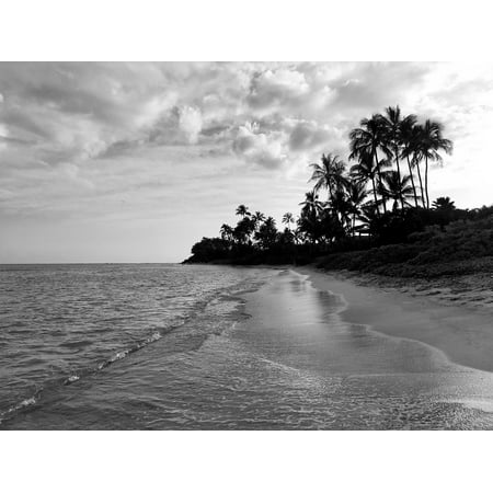 Black And White Canvas Poster (LAMINATED POSTER Palm Trees Black And White Beach Water Hawaii Sand Poster Print 24 x 36)