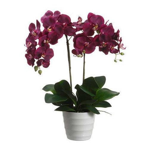 Tori Home Phalaenopsis in Pot