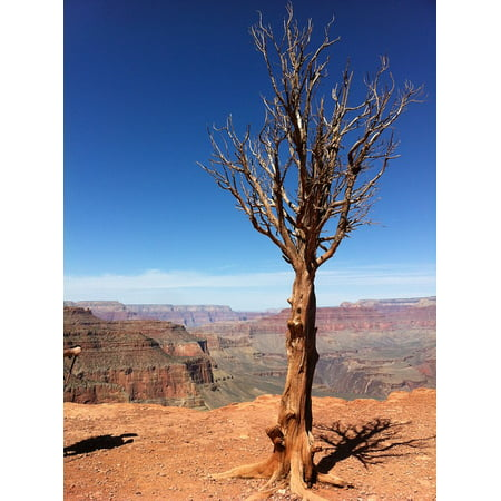 Canvas Print Valley Usa Tree Canyon Rock Grand Desert Nature Stretched Canvas 10 x 14 (Grand Canyon Rock)