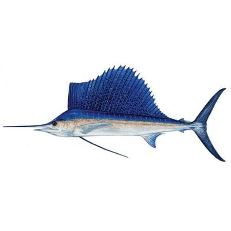 Sailfish Decal