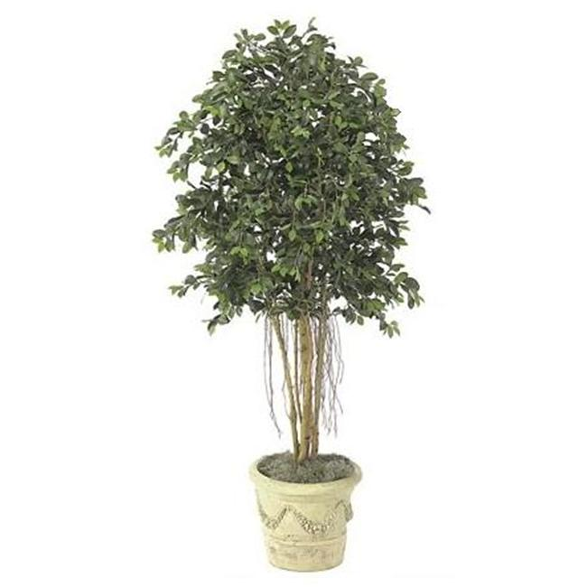 Autograph Foliages W-2610 - 6.5 Foot Multi-Trunk Ficus Tr...