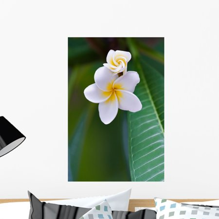 Frangipani Tropical Flower Wall Mural by Wallmonkeys Peel and Stick Gr